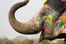 Elefante Enfeitado para o Holi